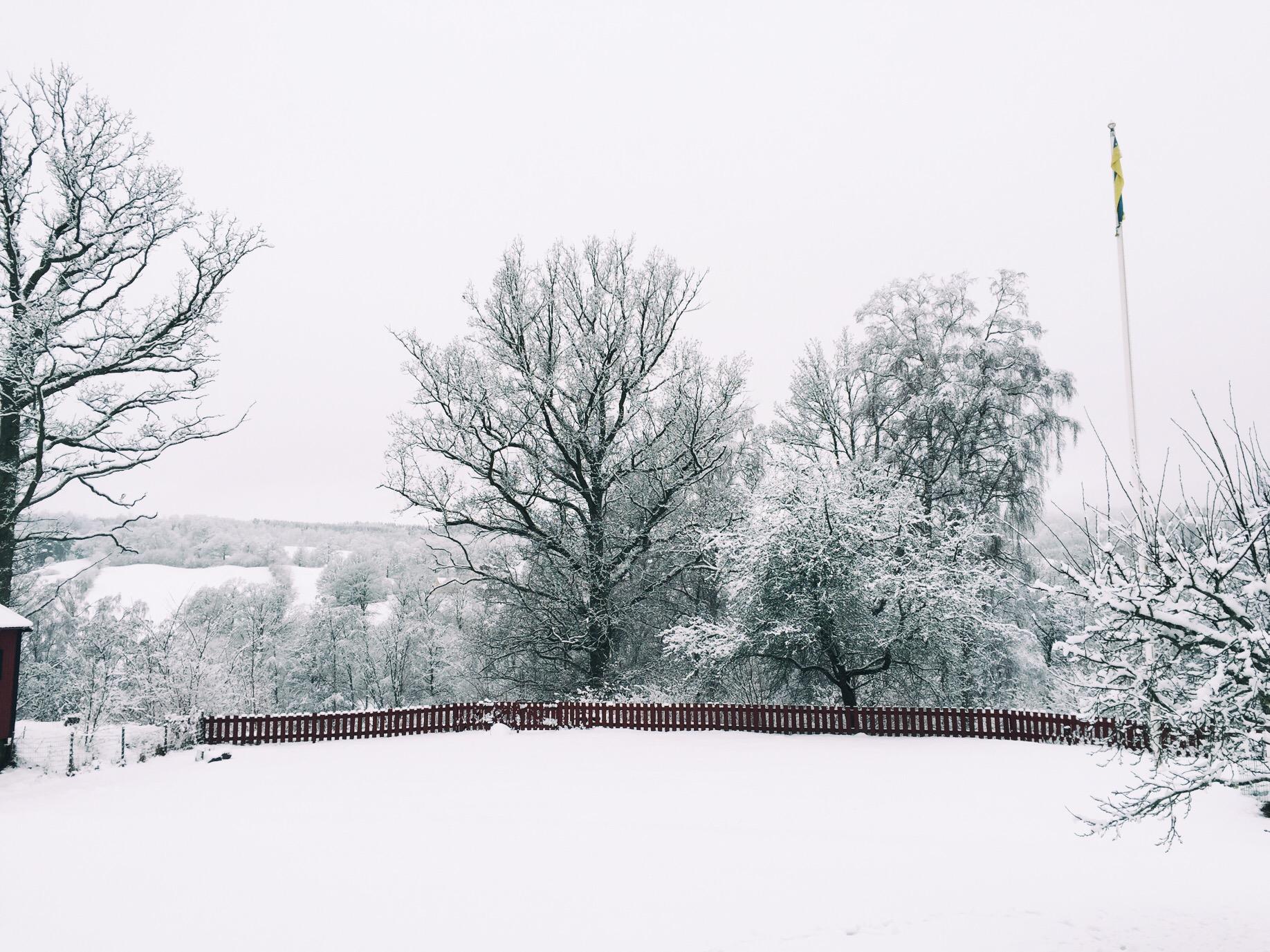 Ett vinterlandksap, snö, träd och ett rött staket.
